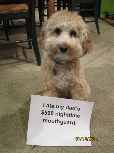dog ate my night guard